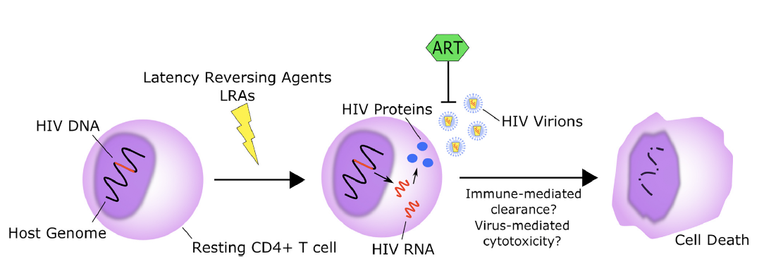 "Getting the ""kill"" into ""shock and kill"": strategies to eliminate latent HIV  