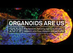 Organoids Are Us 2019 wrap-up