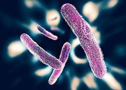 Shigella strain resistant to all oral antibiotics circulating in Victoria
