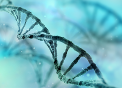 Issue #6: Back to basics: it's all in the DNA…sort of