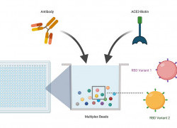 New technique accelerates process of determining vaccine efficacy against emerging SARS-CoV-2 variants