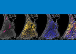 On the nose: preventing influenza infection by targeting immune cells in nose and throat
