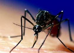 Is the end of ZIka nigh? How populations develop immunity