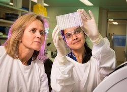Researchers link exhausted immune cells to HIV persistence in the gut