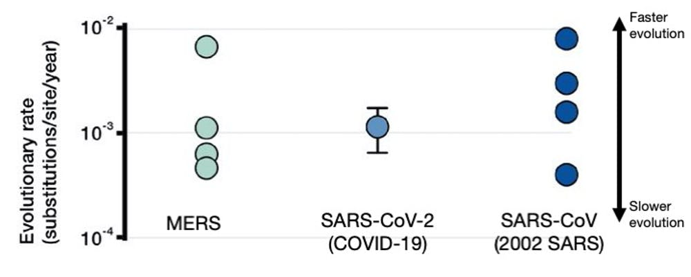 Evolutionary rates for three coronaviruses, including SARS-CoV-2 that causes COVID-19. Higher values indicate viruses that accumulate mutations faster; error bar around SARS-CoV-2 indicates current uncertainty. Taiaroa et al. 2020 / Sebastian Duchene (Univ. Melbourne)